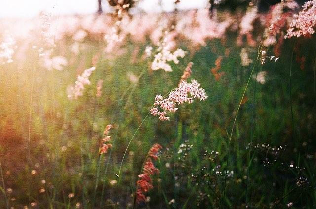 Hình ảnh đẹp về hoa cỏ may 15
