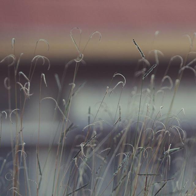 Hình ảnh đẹp về hoa cỏ may 19