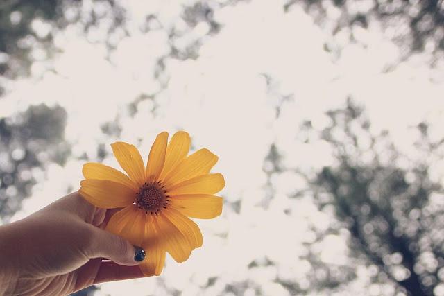 Hình ảnh hoa Dã Quỳ đẹp 15
