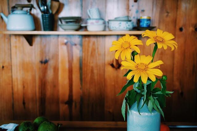 Hình ảnh hoa Dã Quỳ đẹp 22